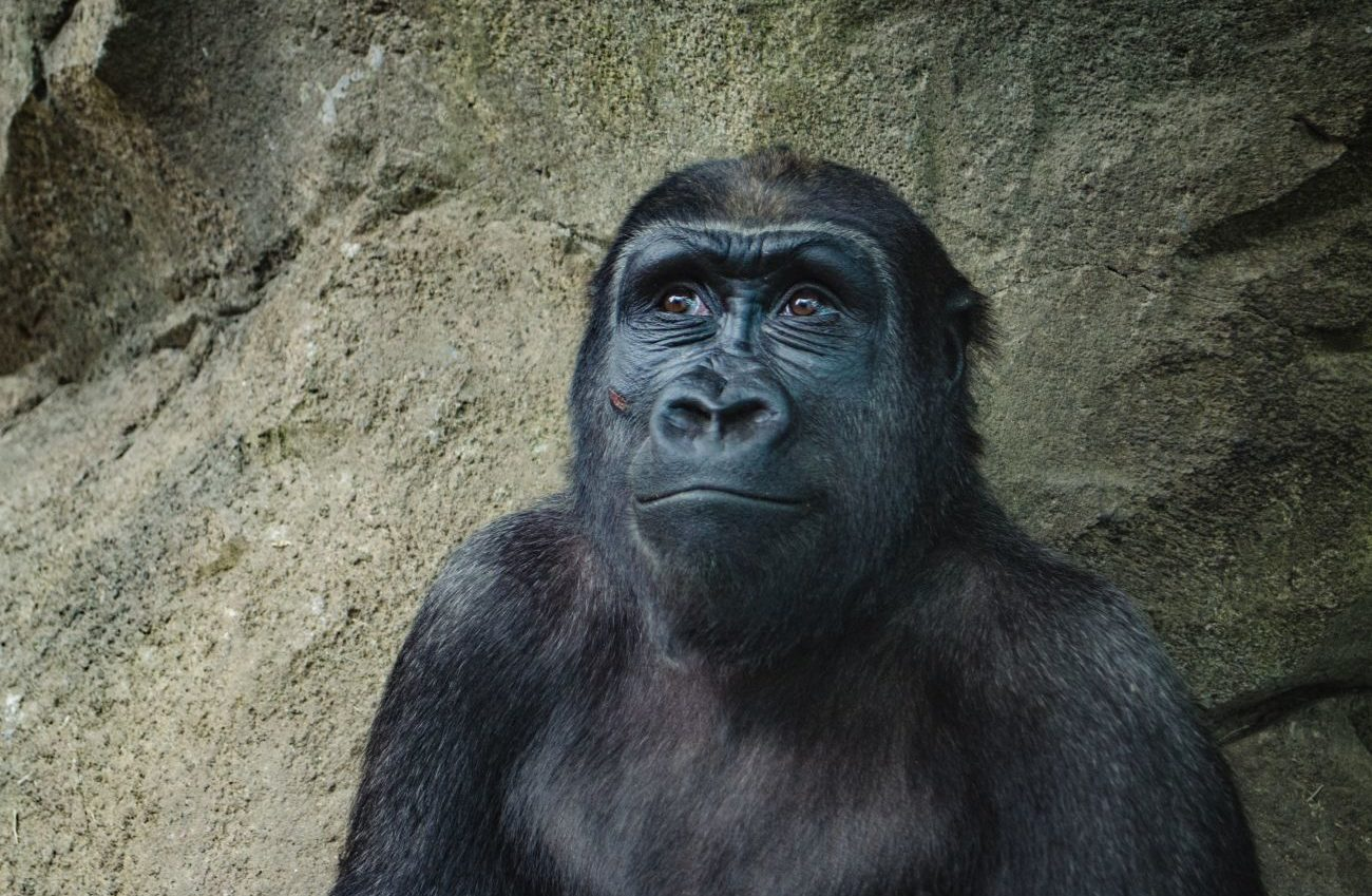 ETF können auch Affen auswählen