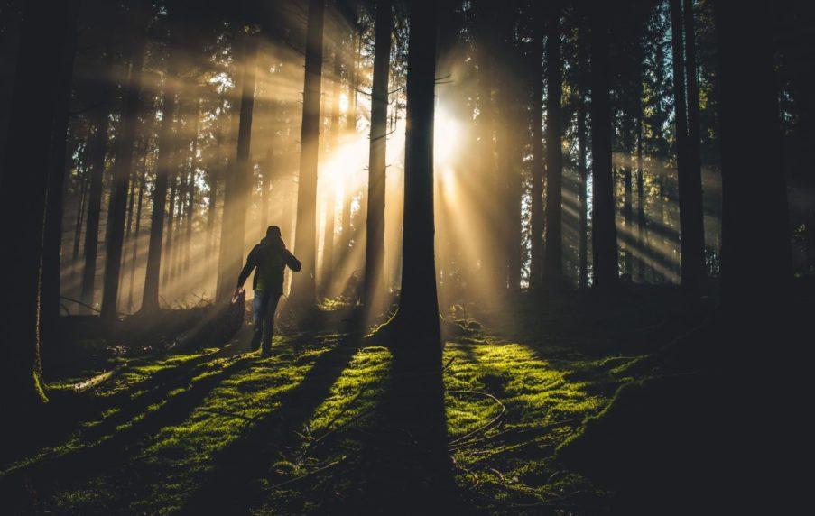 Schutz vor Inflation? Was Wald und Ackerland bringen
